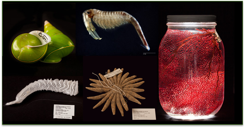 Invertebrate Time Machine Adler Zooniverse Citizen Science Project