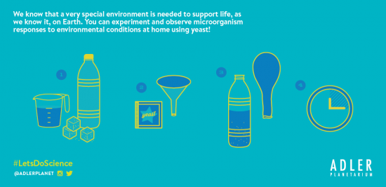 Explore environmental conditions with this Let's Do Science experiment!