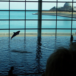 Shedd Aquarium Free Days Located On Museum Campus